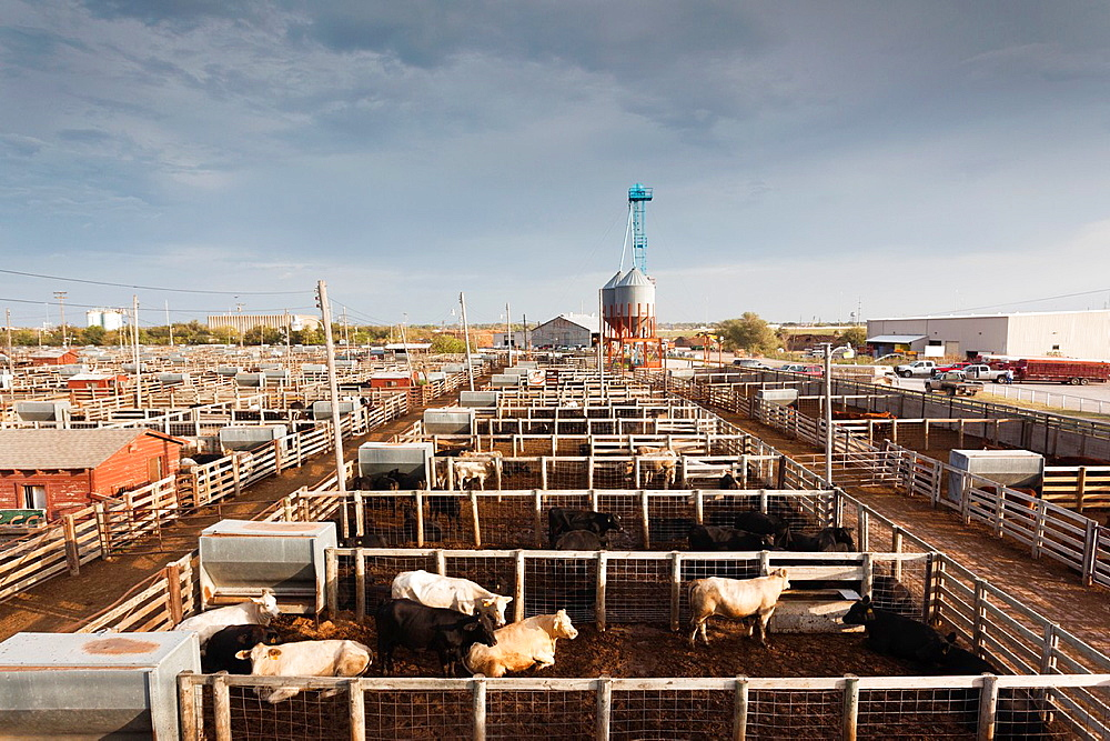 USA, Oklahoma, Oklahoma City, Oklahoma National Stockyards, elevated view of cattle pens