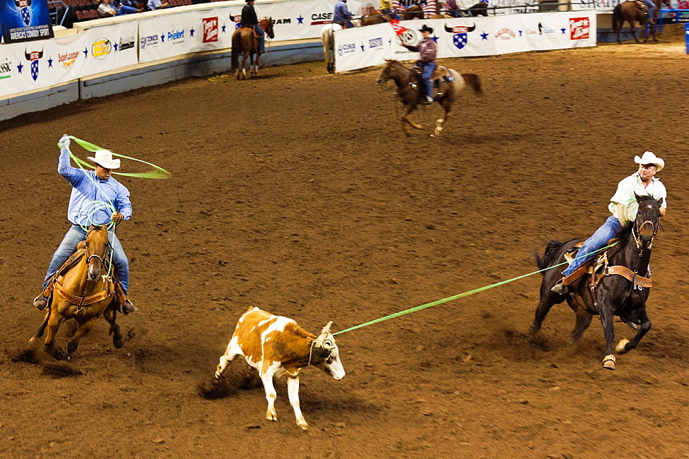 USA, Oklahoma, Oklahoma City, Oklahoma State Fair Park, Cowboy Rodeo Competition, cattle roping, motion-blur