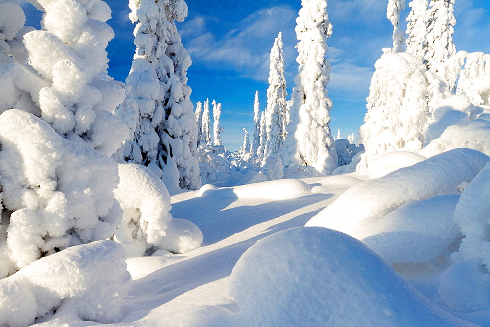 Sunny winter landscape with a lot of snow on spruces in swedish lapland - 817-430855