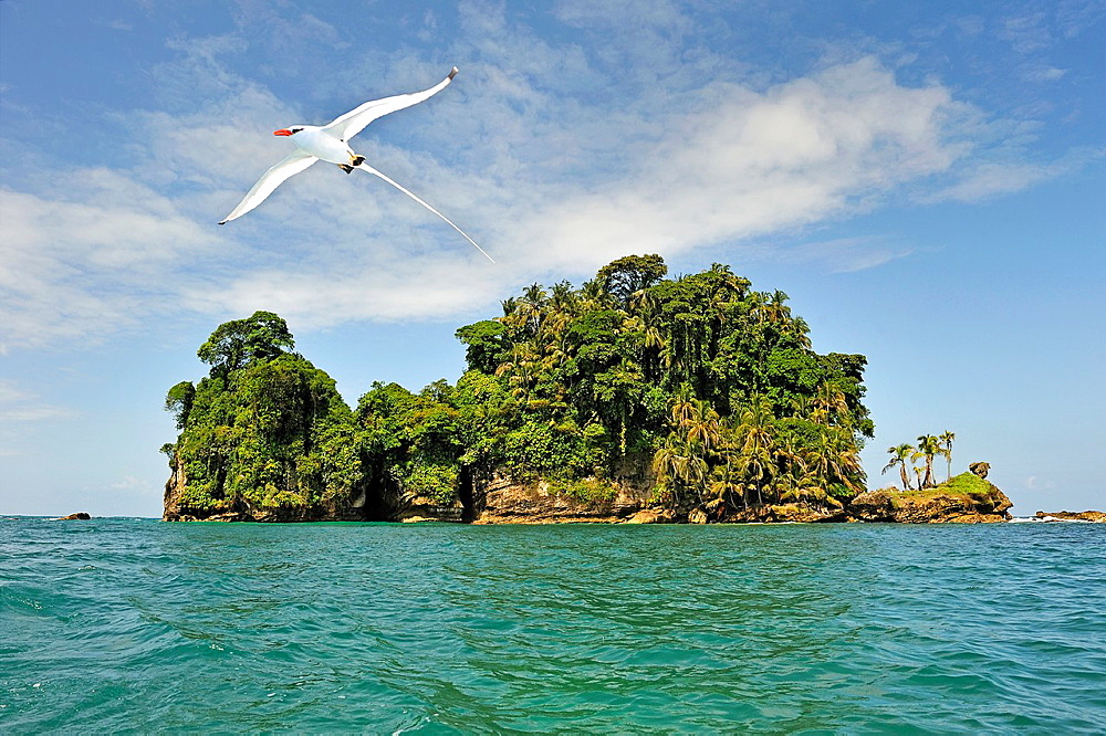 Seabirds Tropicbirds, Pajaros Islet Also Named Swan'S Cay Off The Coast Of Boca Del Drago On Colon Island, Bocas Del Toro Archipelago, Republic Of Panama, Central America