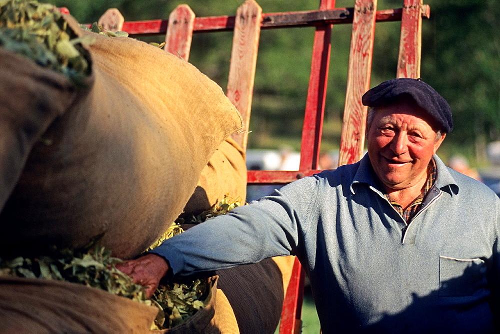 man posing beside his harvest, Tilia fair at La Charce, Drome department, region of Rhone-Alpes, France, Europe