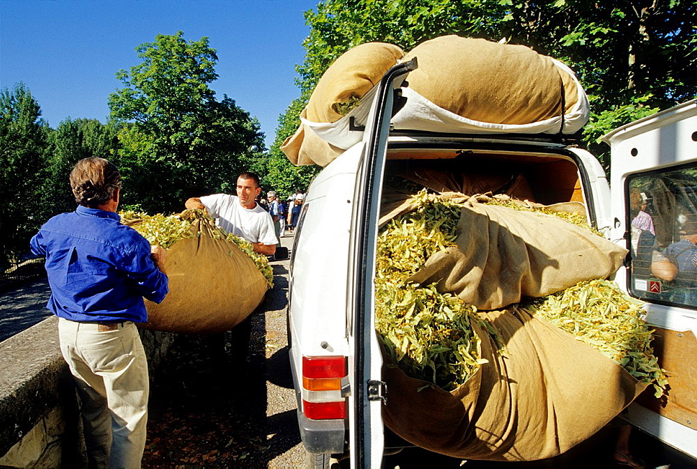 people bringing their production to the Tilia fair of Buis-les-Baonnies, Drome department, region of Rhone-Alpes, France, Europe