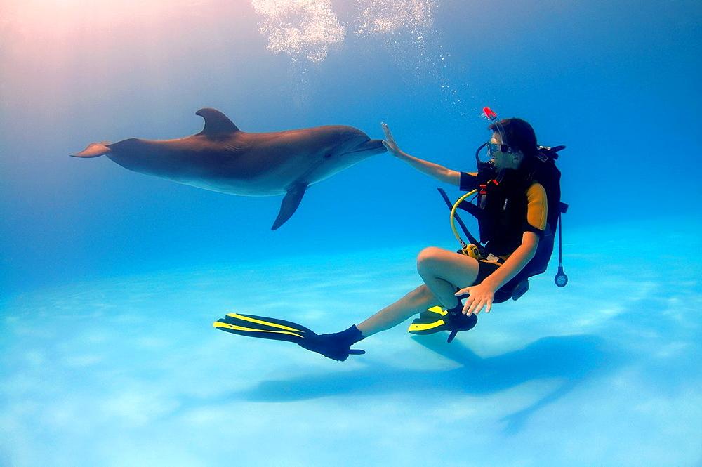 common bottlenose dolphin Tursiops truncatus Delphinarium, Odessa, Ukraine