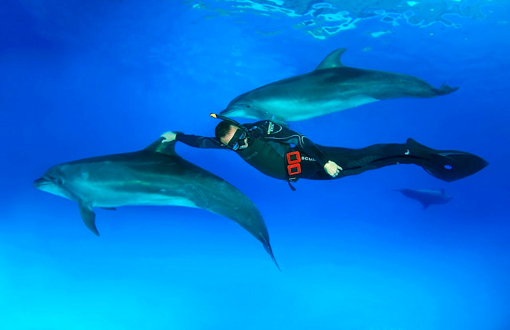 Freediver and Bottlenose dolphin Tursiops truncatus, Dolphinarium, Odessa, Ukraine, Europe
