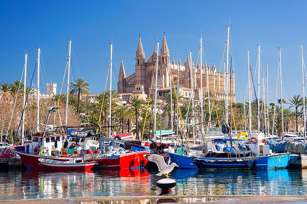 Palma Cathedral from Moll de la Riba, Palma, Mallorca, Balearic Islands, Spain, Europe