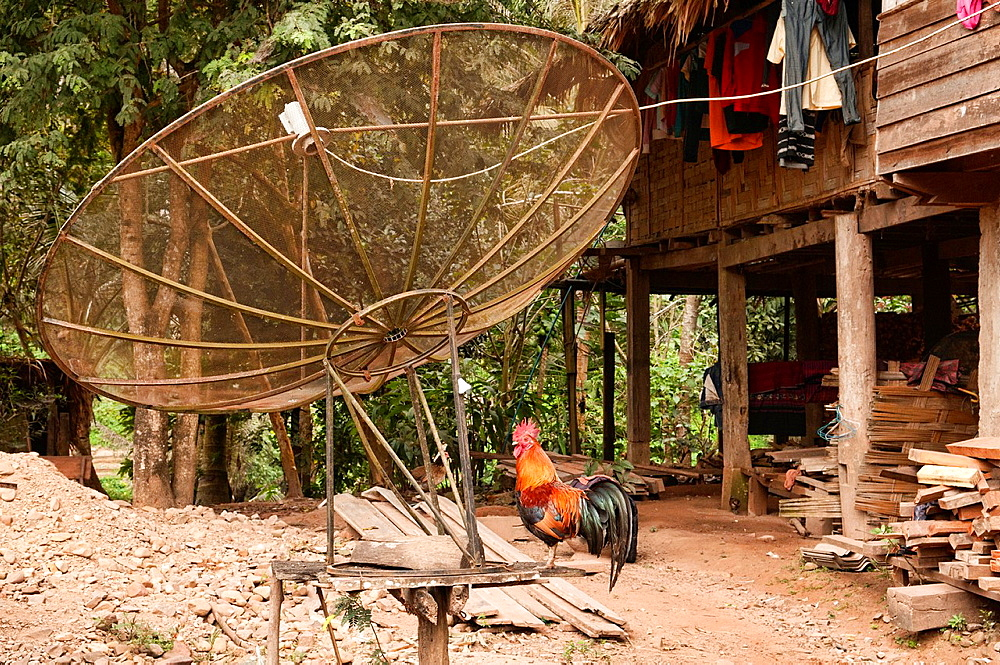 satellite dish holder and rooster in rural Khmu village, Luang Nam Tha, Laos