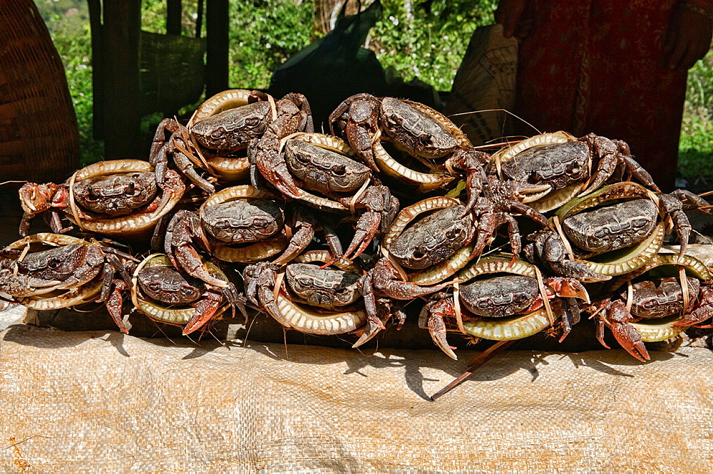 crabs for sale in the market, Luang Prabang, Laos