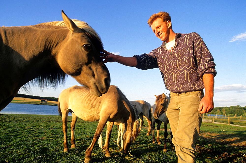 Tarpan horses, equus caballus gmelini, wildlife park of Sainte-Croix, Moselle department, Lorraine region, France, Europe