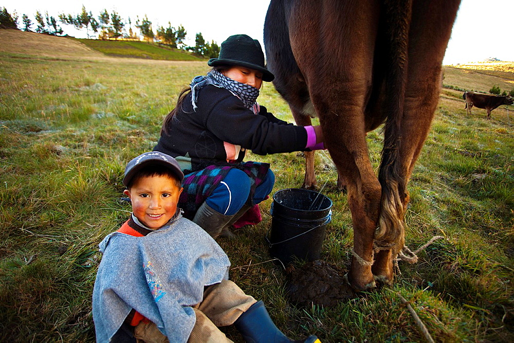 Ecuador, Salinas, Jimena Tualombo milking and her son.