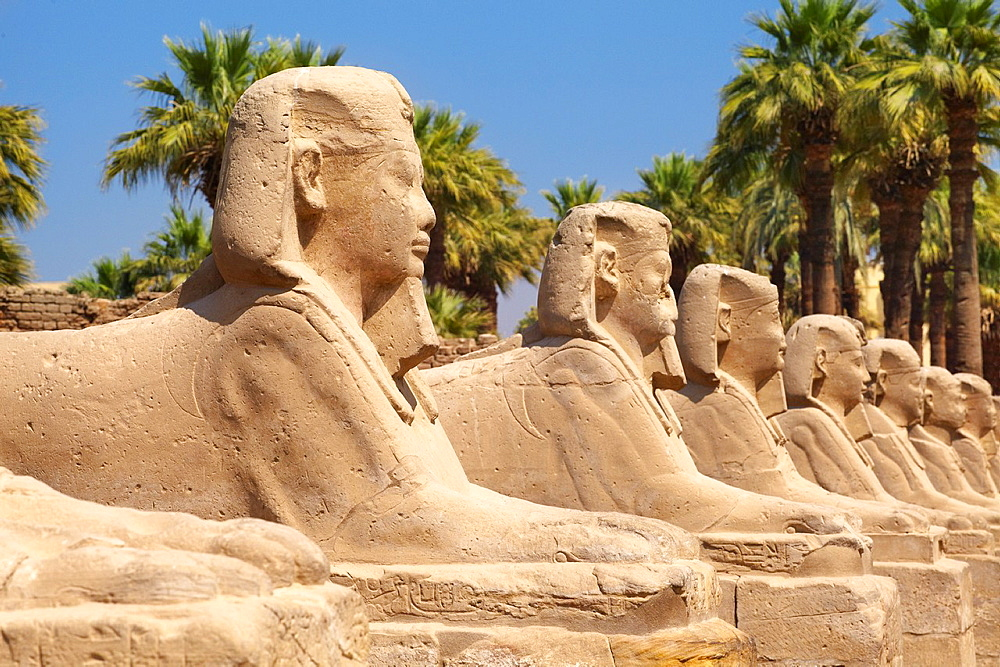Luxor, Egypt, Avenue of Sphinxes in Luxor Temple, Upper Egypt
