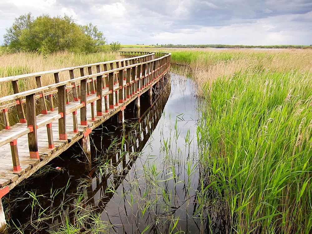 Boardwalk in wetlands of Tablas de Daimiel National Park, La Mancha, Spain