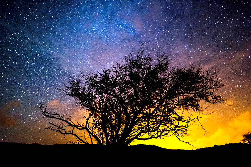Silhouette of tree against night sky
