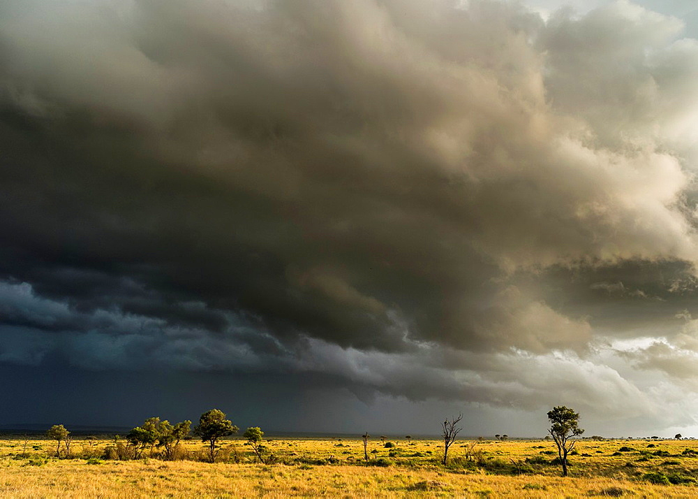 Storm over the Maasai Mara. Africa, East Africa, Kenya, Maasai Mara, December - 817-440530