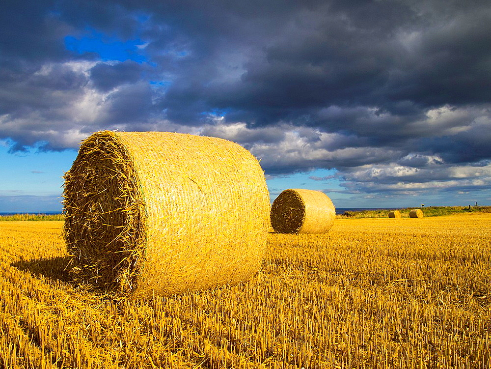 England, North Yorkshire, Scarborough. Hay bales in a field in North Yorkshire.