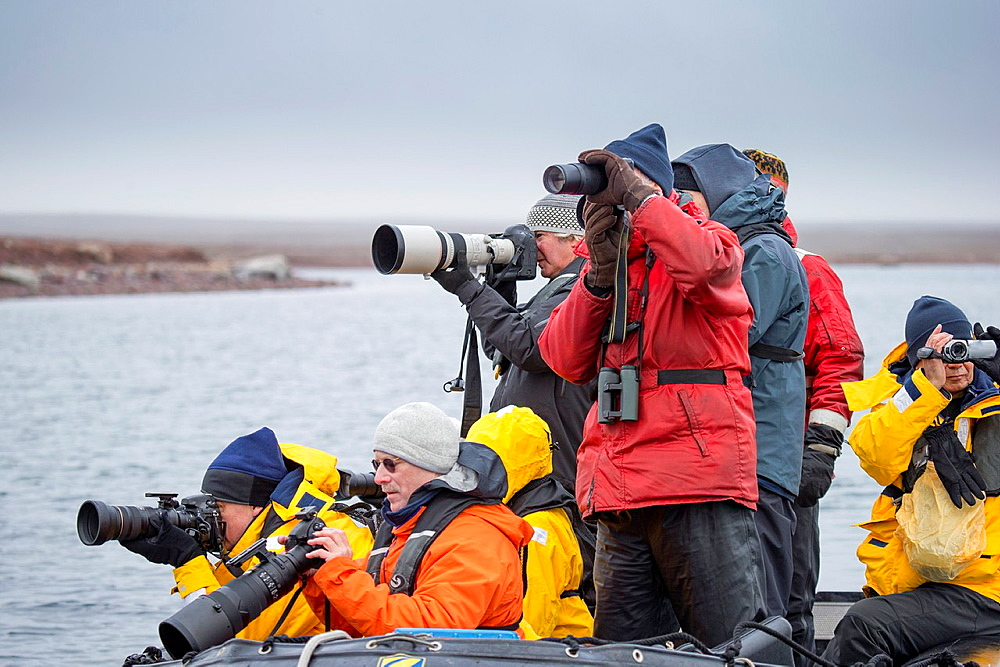 Tourist in Zodiacs watching and photographing polar bears, Svalbard, Norway. - 817-441504
