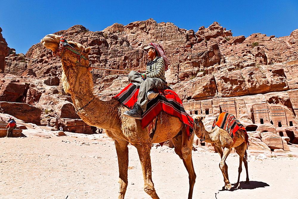 Camels in tombs of petra ruins. jordan.