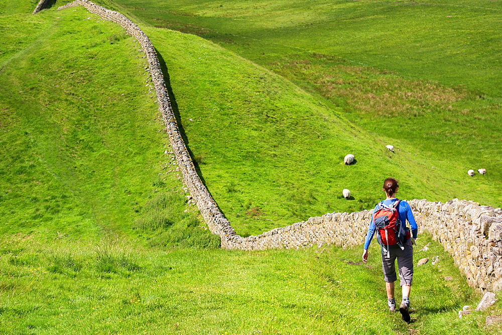 A hiker walking alongside Hadrians Wall near Crag Lough in Northumberland, England, UK.