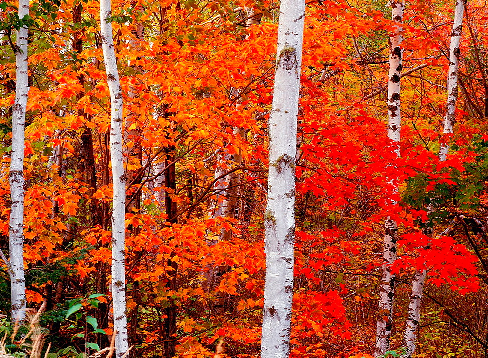 Autumn colors in the Superior National Forest, Minnesota