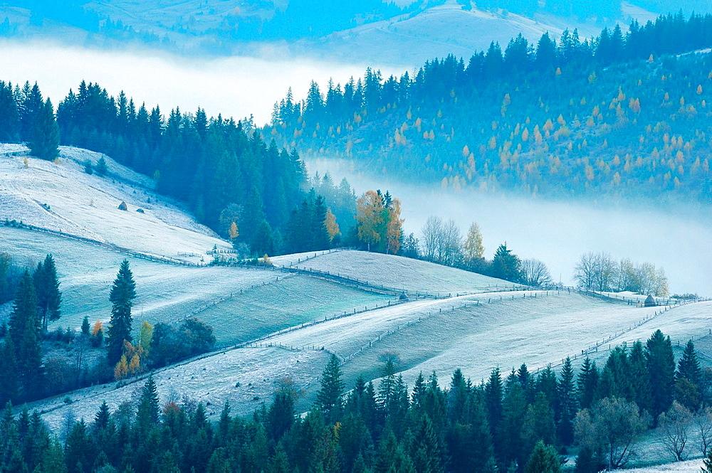 Misty morning, Krasnik village area, Carpathian Mountains, Ivano-Frankivsk region, Ukraine