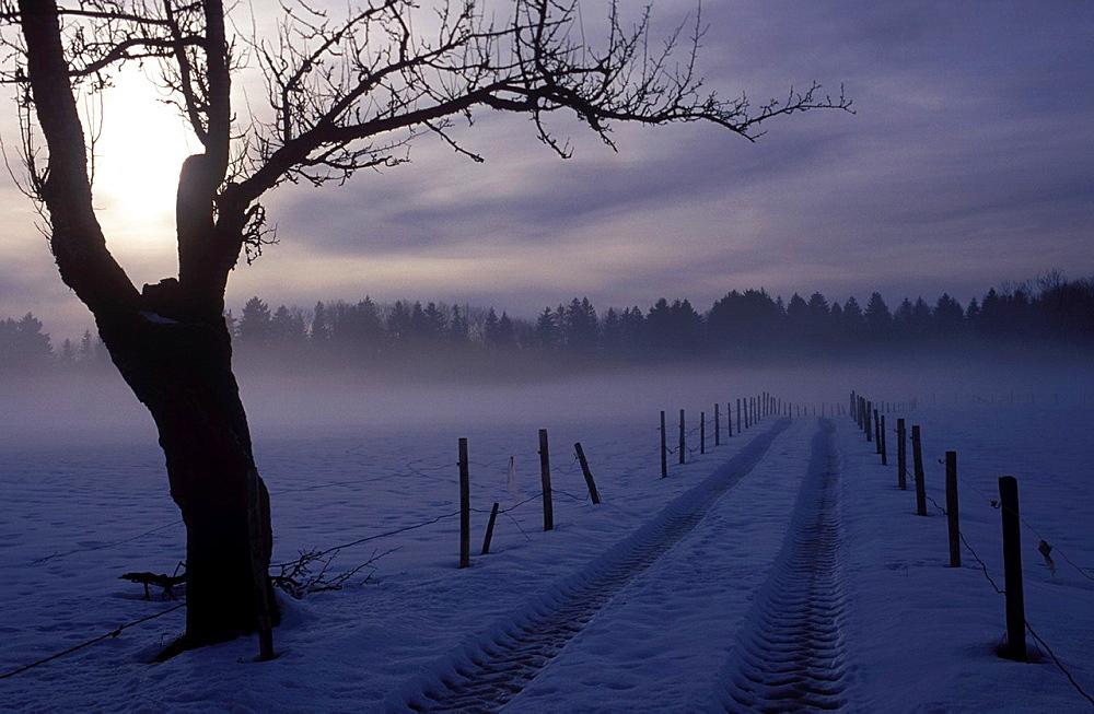 Wintry Walk on a gloomy winter day in the Allgau
