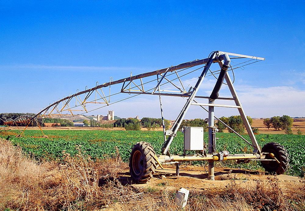 Irrigation crop. Torrelobaton, Valladolid province, Castilla Leon, Spain.