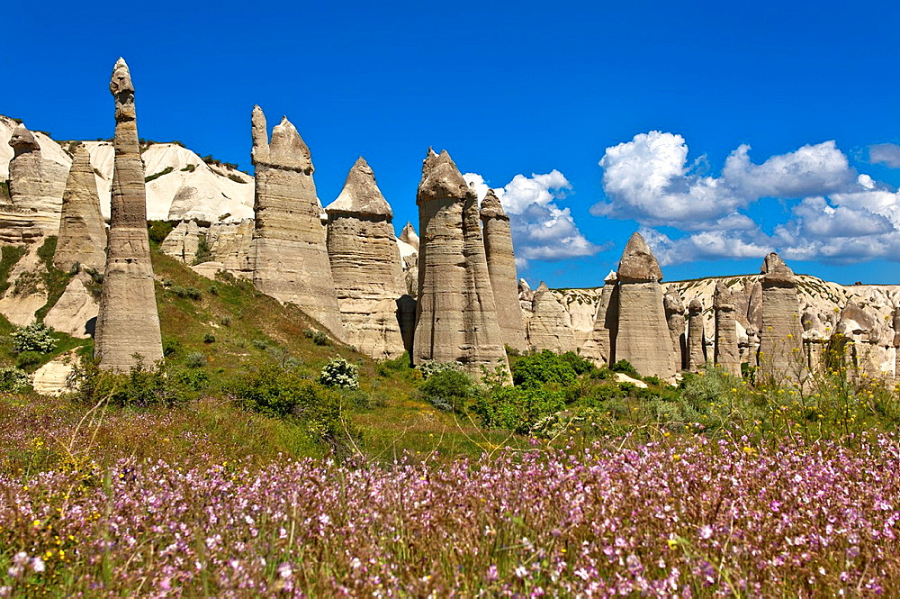 Tuff rock formations or fairy chimneys in the Love Valley near Uchisar, UNESCO World Heritage site Goreme National Park and the Rock Sites of Cappadocia, Cappadocia, Turkey.