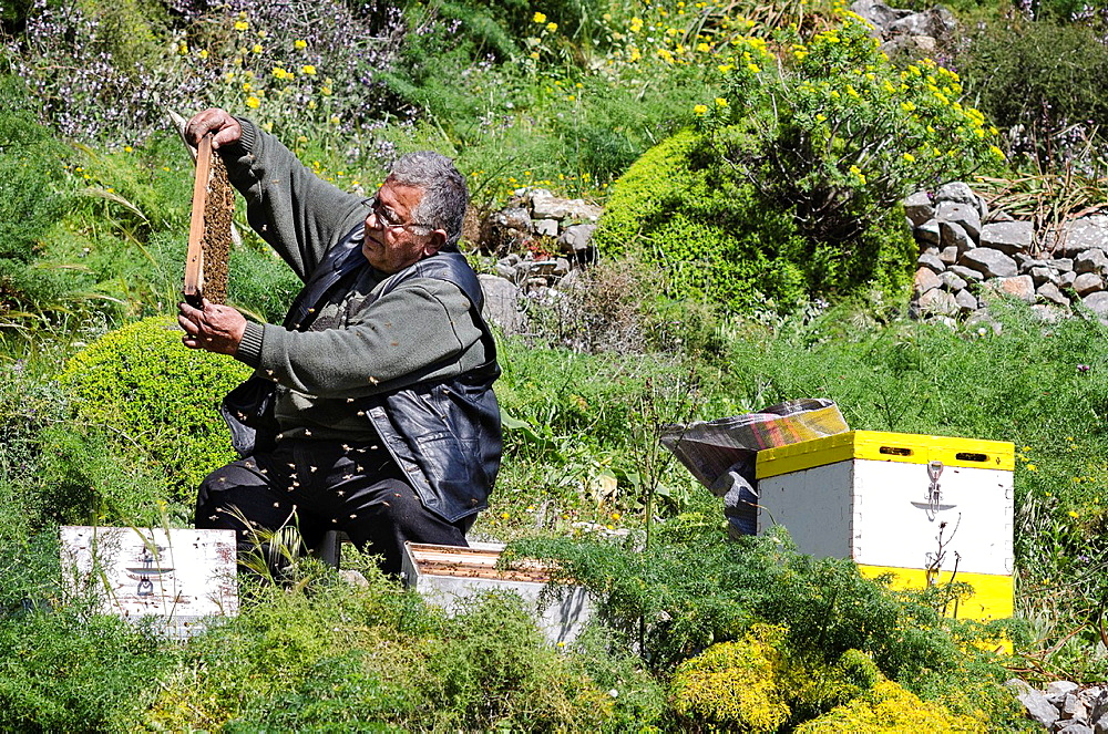 A beekeeper inspecting his hives in the Mani, Peloponnese, Greece.