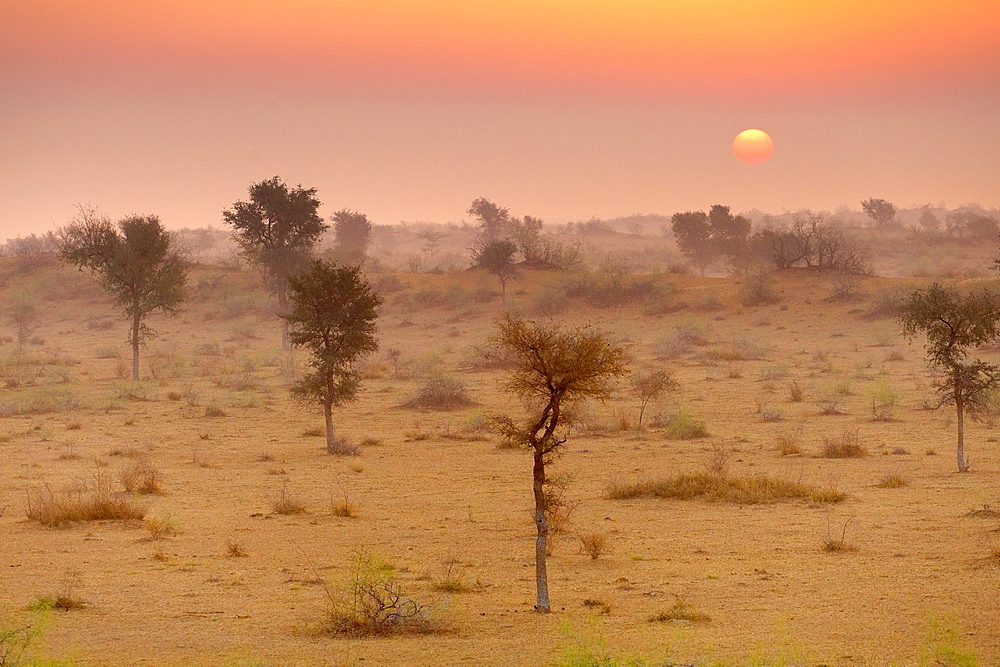 Sunrise in Thar desert near Jaisalmer, Rajasthan, India.