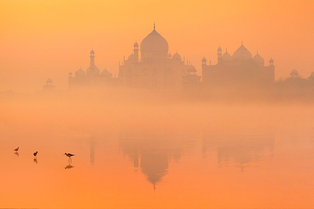Taj Mahal and Yamuna River (Northern view of Taj Mahal), Agra, Uttar Pradesh, India. - 817-444502