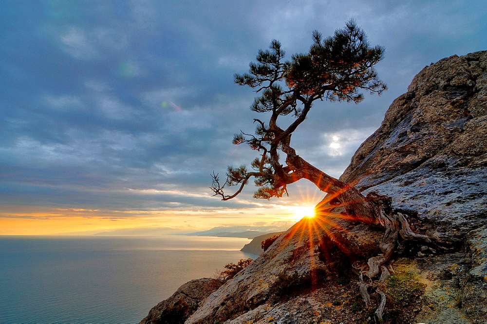 Tree growing from rock by Black Sea, Novyi Svit village area, Crimea, Ukraine