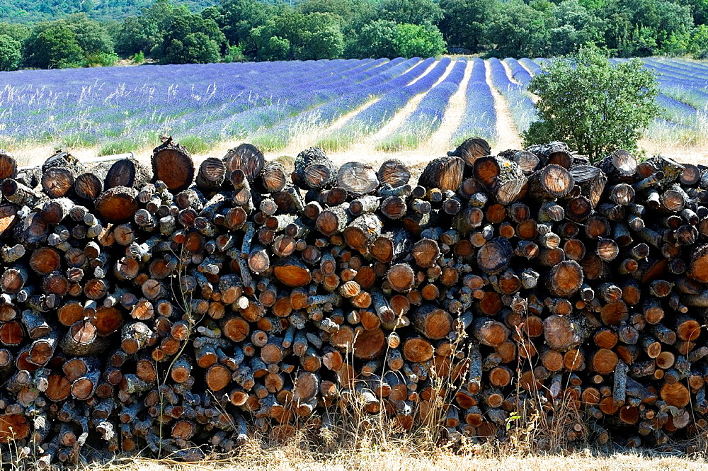 Pile of Wood, Lavender Field, Landscape Scenery, Provence, France.