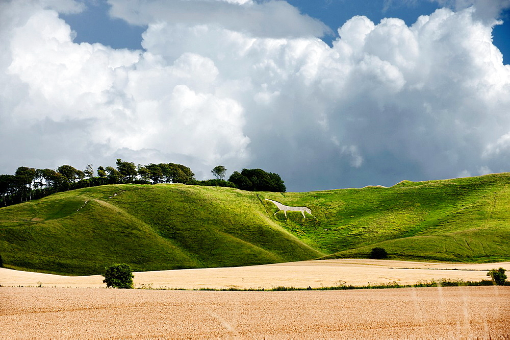 The Cherhill Downs. Wiltshire, UK.
