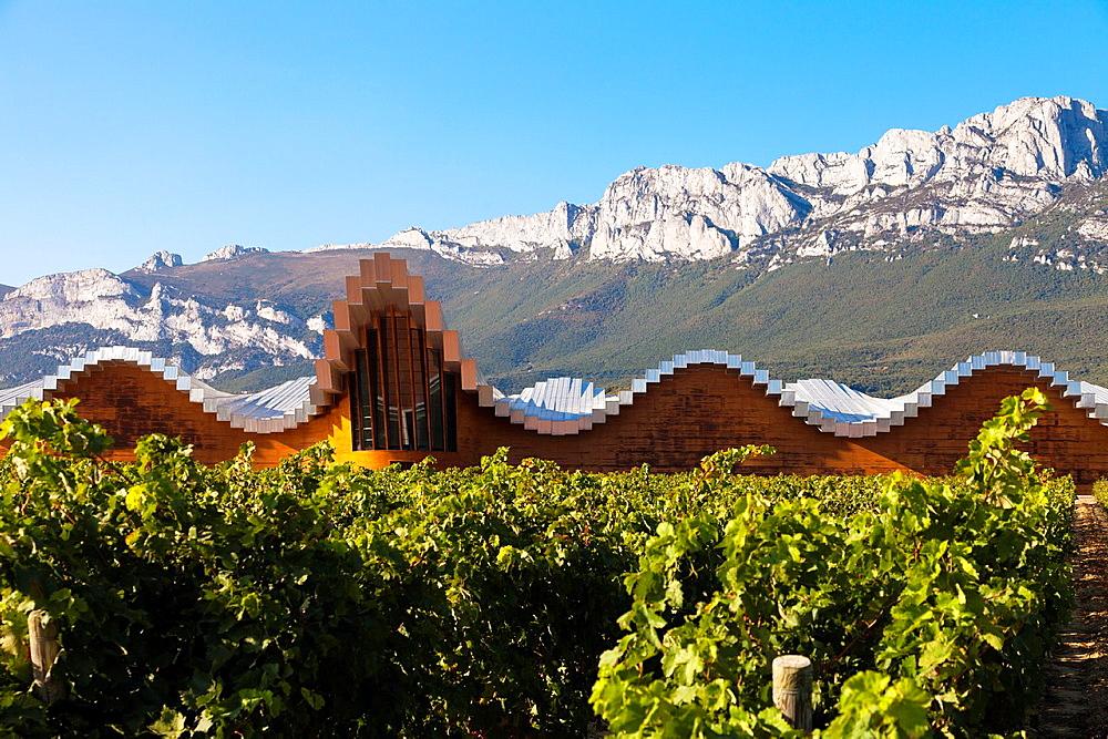 Bodegas Ysios wine cellar, built by Santiago Calatrava, Laguardia, Alava, Spain, Europe.