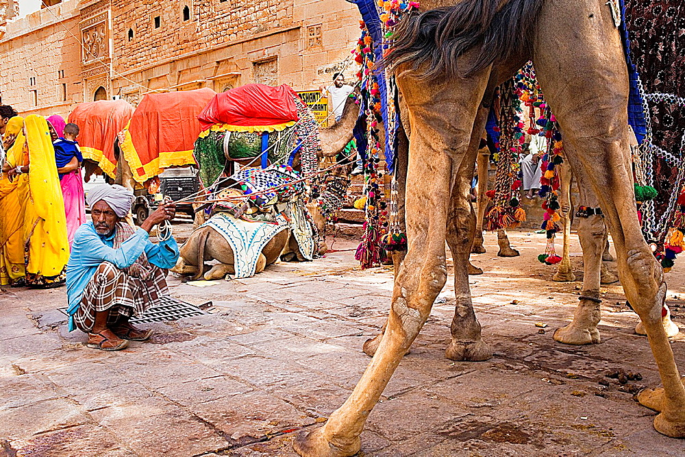 Gangaur festival,camels inside the Fort,Jaisalmer, Rajasthan, India.