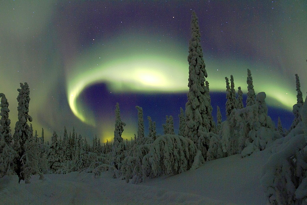 Aurora borealis, Northernlight over winter forest with snow on the trees in Gallivare in Swedish lapland. - 817-447976