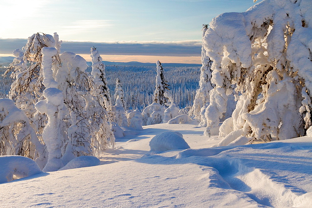 Winter landscape with snow hang on spruces and birches on mount Hirvas in Gallivare, Swedish lapland.