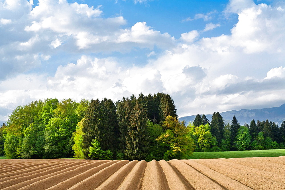 Scenic landscape with field planted with potatoes. Slovenian countryside.