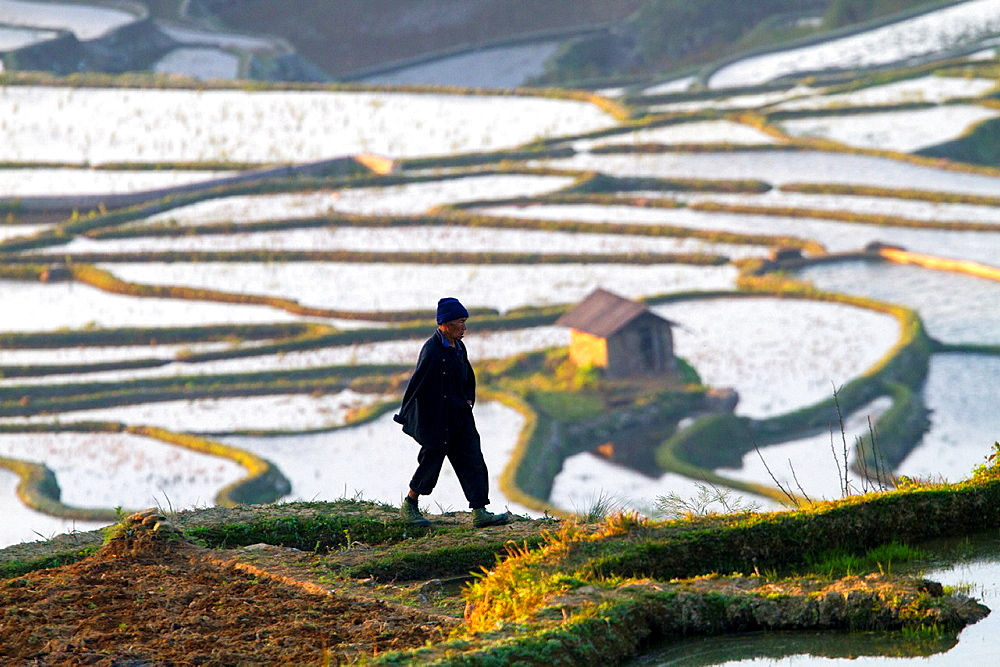 China , Yunnan province , Hani people, Yuanyang , Azheke village, rice terraces , peasant , farmer.