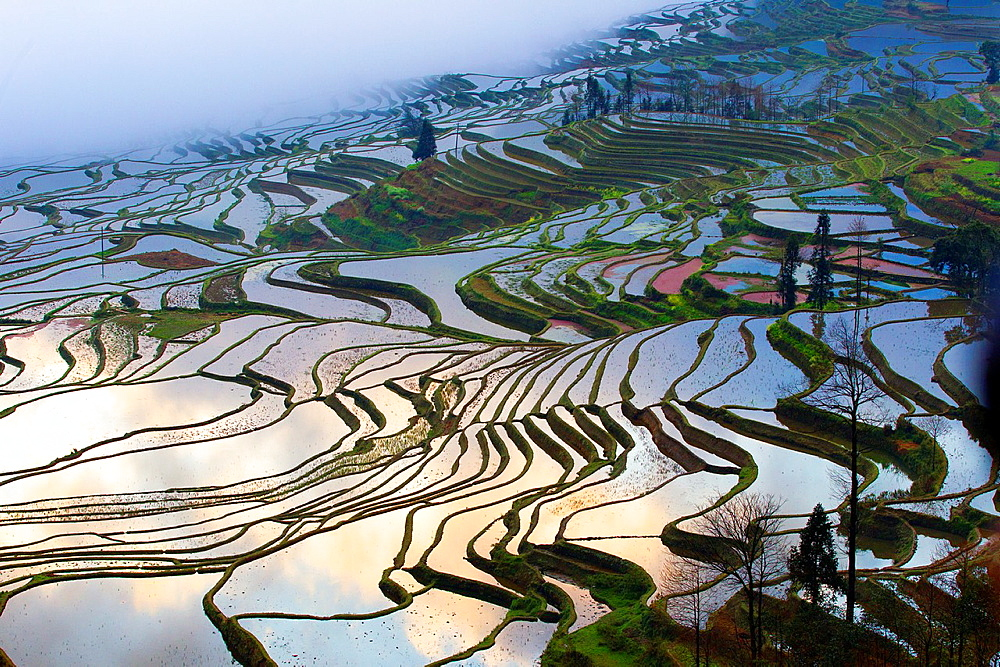 China , Yunnan province , Hani people, Yuanyang , Duoyishu village, rice terraces , sunrise.