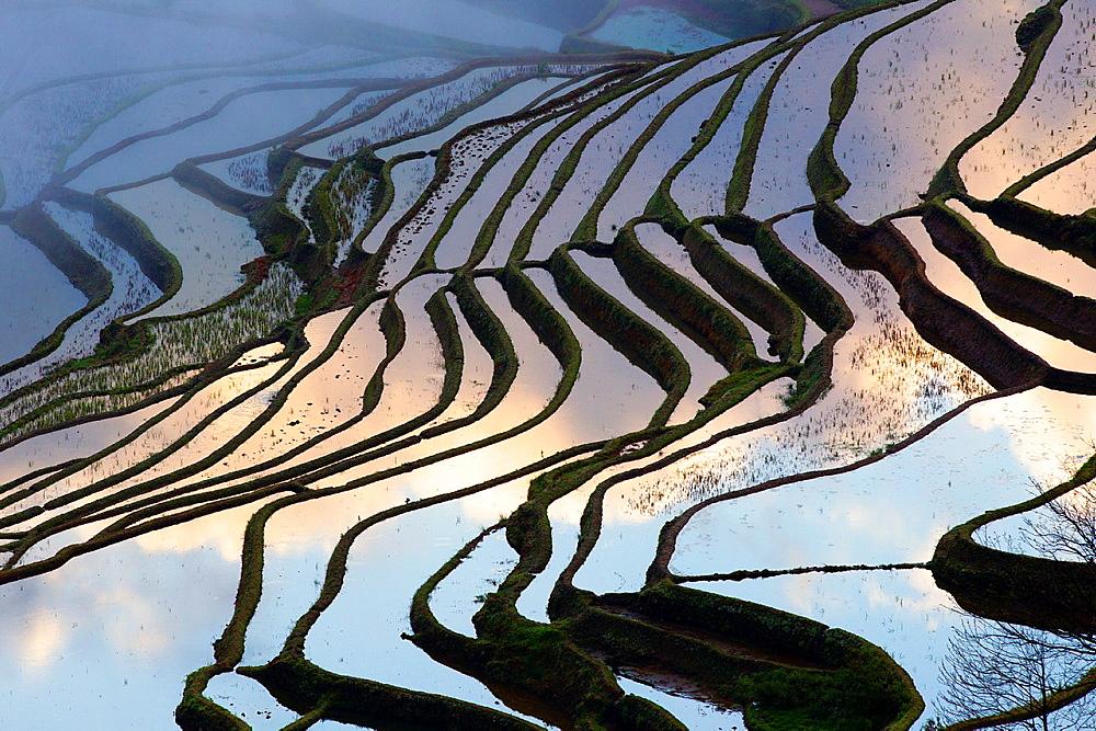 China , Yunnan province , Hani people, Yuanyang , Duoyishu village, rice terraces , sunrise.