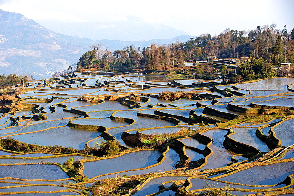 China , Yunnan province , Hani people, Yuanyang , Azheke village, rice terraces ,.