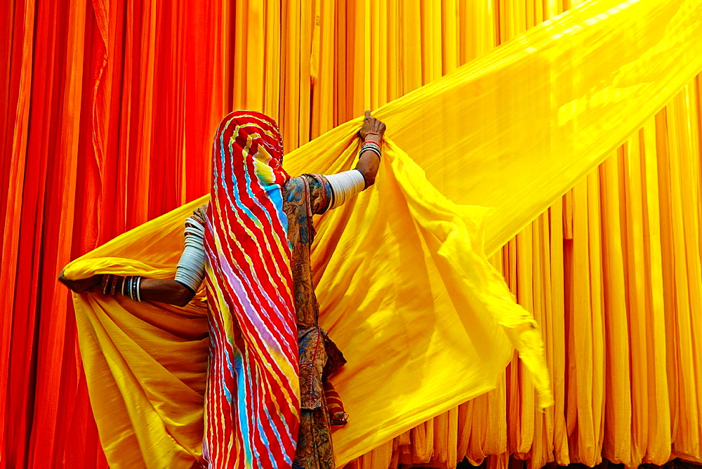 India, Rajasthan, Sari Factory, Lesmay, 40 old. Textile are dried in the open air. Collecting of dry textile are folded by women and children. The textiles are hung to dry on bamboo rods. The long bands of textiles are about 800 metre in length. - 817-449057