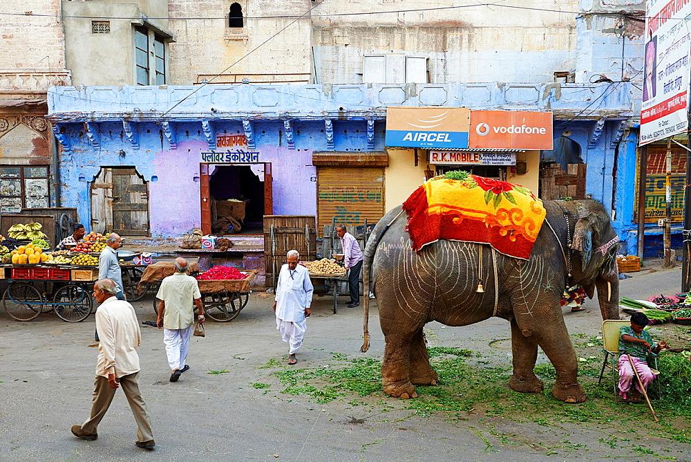 Inde, Rajasthan, Jodhpur la ville bleue / India, Rajasthan, Jodhpur, the blue city.