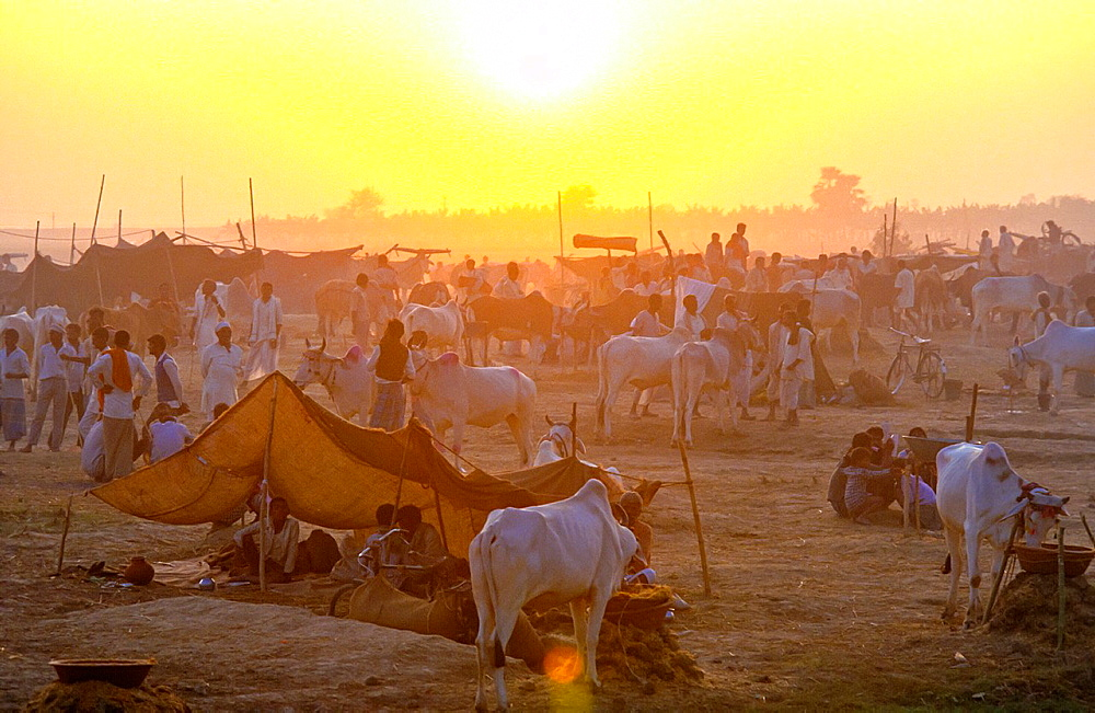 sunrise at animal fair in Sonpur, India
