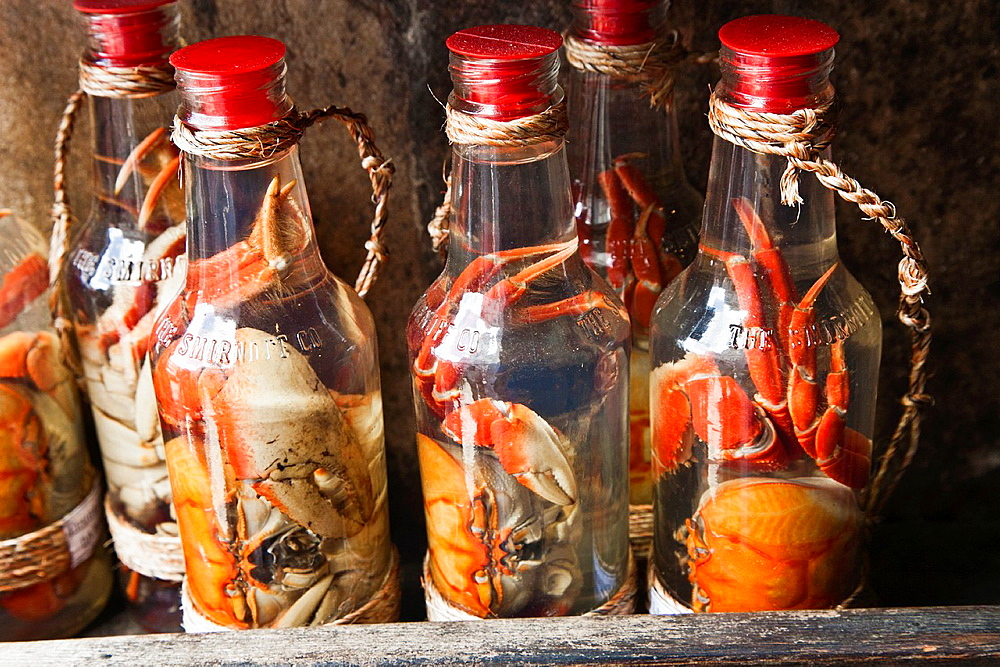 Crabs in a bottle, Pelourinho, Salvador, Bahia, Brazil.
