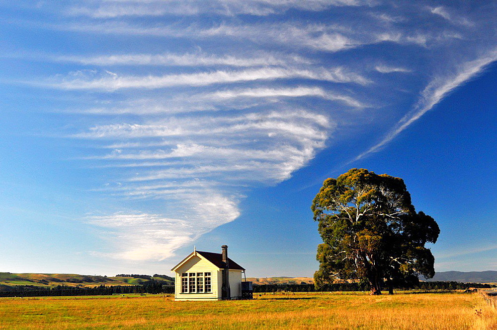 Farm house, tree and clouds, South Island, New Zealand. - 817-451103