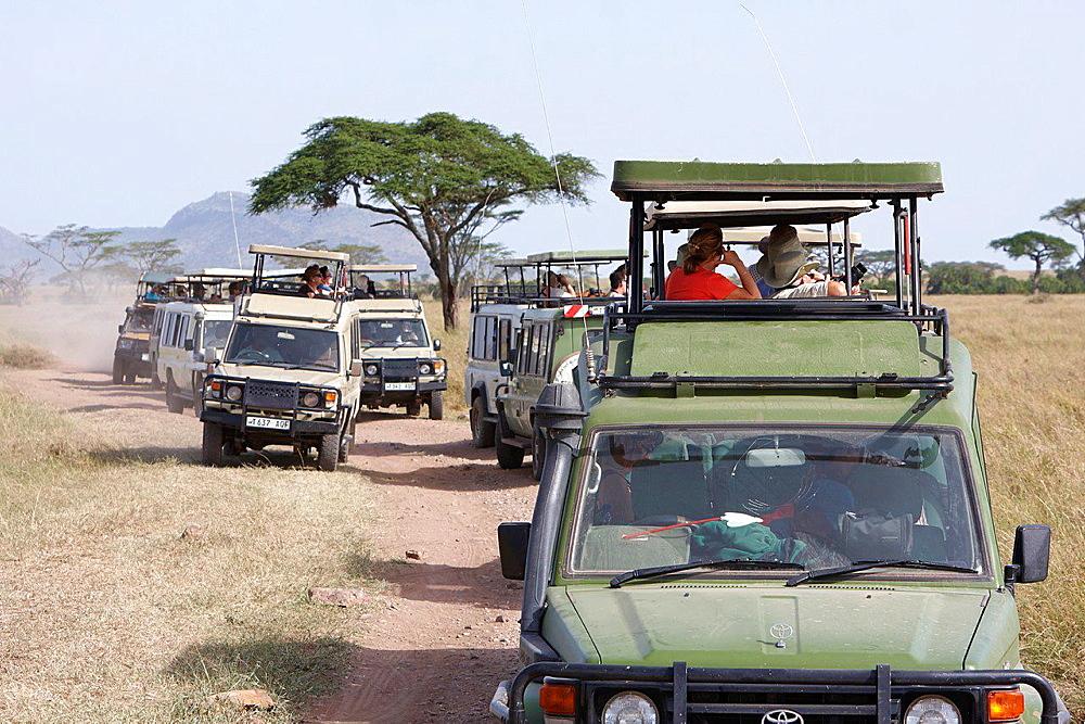 Traffic jam in the Serengeti National Park.