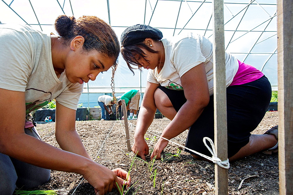 Detroit, Michigan, Students in the Earthworks Agricultural Training Program plant green onions in the greenhouse at the Capuchin Soup Kitchen. The nine-month program helps community members develop the skills they need to start their own community-based f
