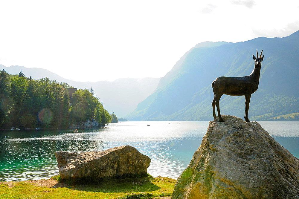 chamois, Slovenia, national park Triglav, Bohinjsko jezera.
