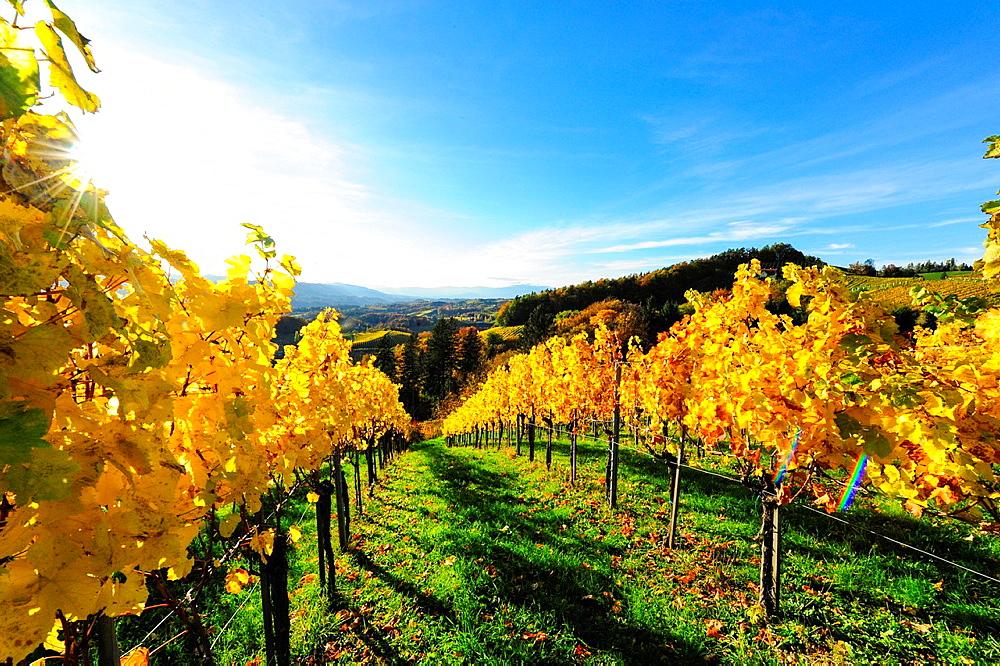 Suedsteirische Weinstrasse, Southern Styria wine route in autumn, Austria, Styria, Southern Styria, Glanz.